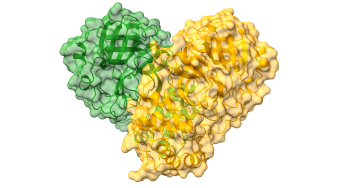 Structure of SARS-CoV-2 Main protease. Cartoon representation of the CoVID-19 dimer with a semi-transparent surface in green and orange delineating each monomer